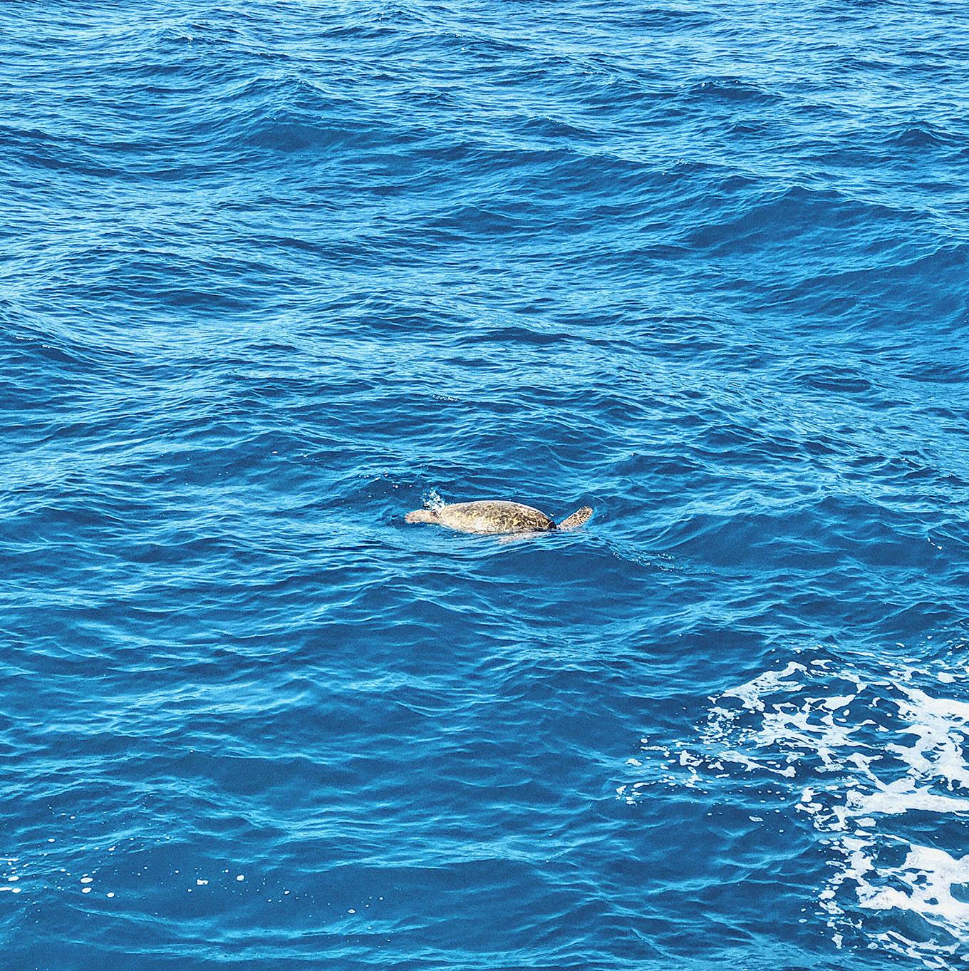 serendipity snorkeling tour Oahu