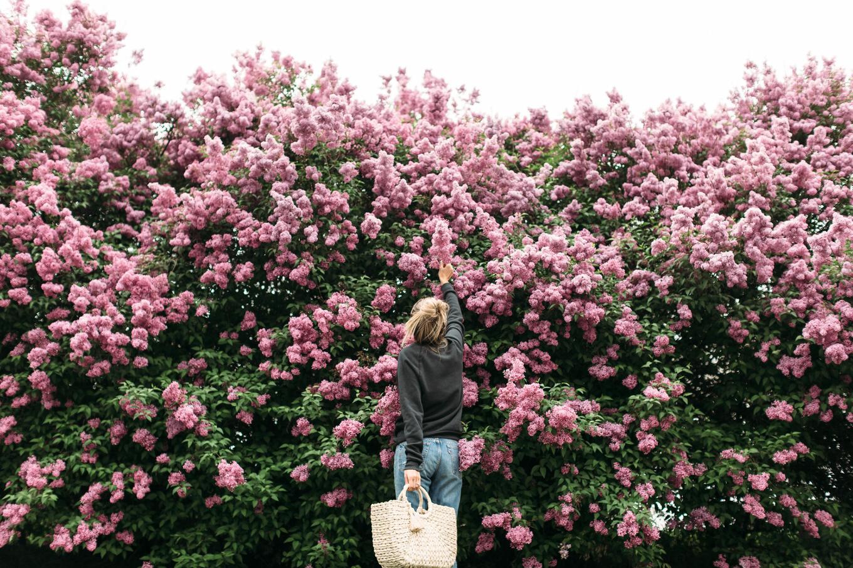 utah spring blooms