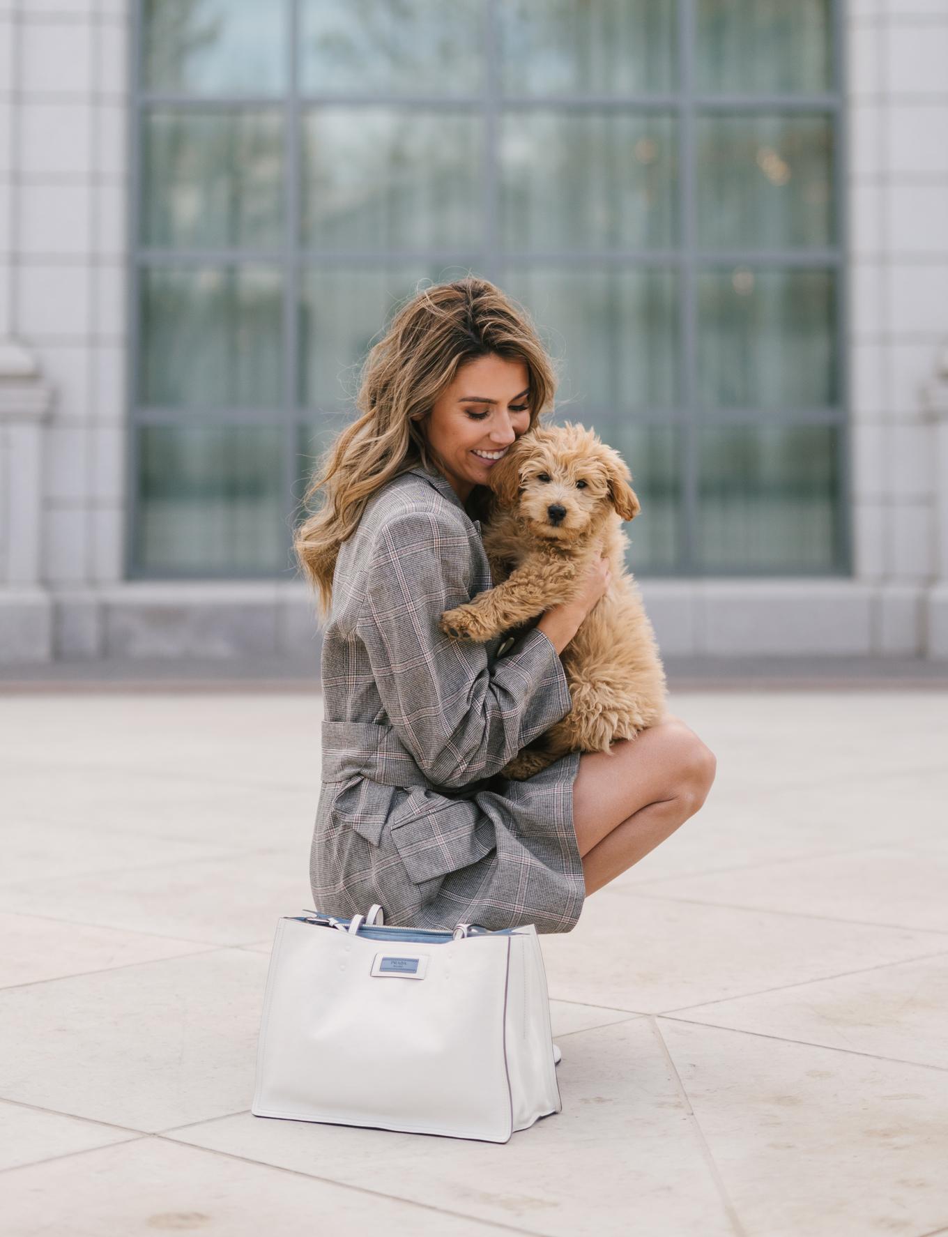 hello fashion puppy